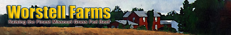 Meat for Sale | Buy Beef Online - US Wellness - Tasty, Healthy Grass Fed Beef for your Diet